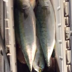 10月7日 (土)  午後便・ウタセ真鯛の写真その11