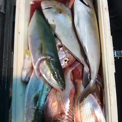 10月9日 (月)  午後便・ウタセ真鯛の写真その7