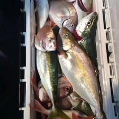 10月9日 (月)  午後便・ウタセ真鯛の写真その9