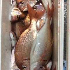 10月9日 (月)  午後便・ウタセ真鯛の写真その10