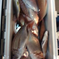 10月9日 (月)  午後便・ウタセ真鯛の写真その11