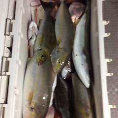 10月12日 (木)  午後便・ウタセ真鯛の写真その12