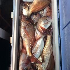 10月15日 (日)  午後便・ウタセ真鯛の写真その2