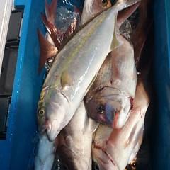 10月15日 (日)  午後便・ウタセ真鯛の写真その4