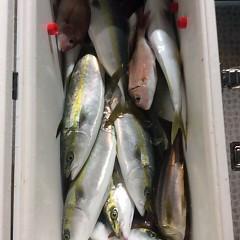 10月16日 (月)  午後便・ウタセ真鯛の写真その3