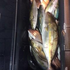 10月16日 (月)  午後便・ウタセ真鯛の写真その6