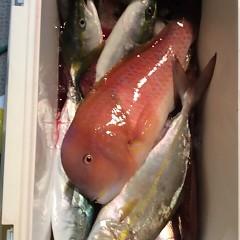 10月16日 (月)  午後便・ウタセ真鯛の写真その7