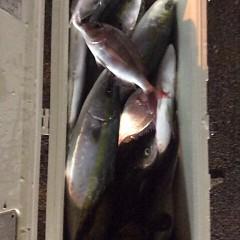 10月16日 (月)  午後便・ウタセ真鯛の写真その8