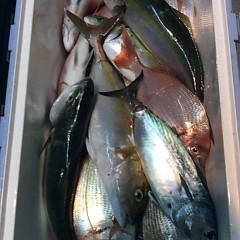10月17日 (火)  午後便・ウタセ真鯛の写真その10