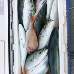 10月18日 (水)  午前便・ウタセ真鯛の写真その4