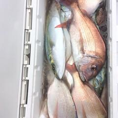 10月18日 (水)  午前便・ウタセ真鯛の写真その5