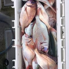 10月18日 (水)  午前便・ウタセ真鯛の写真その8
