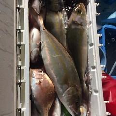 10月18日 (水)  午後便・ウタセ真鯛の写真その6