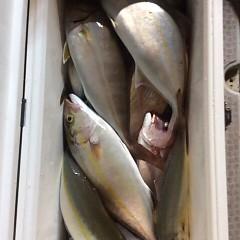 10月18日 (水)  午後便・ウタセ真鯛の写真その7