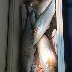 10月18日 (水)  午後便・ウタセ真鯛の写真その9
