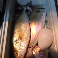 10月18日 (水)  午後便・ウタセ真鯛の写真その10