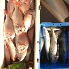 10月20日 (金)  午後便・ウタセ真鯛の写真その1