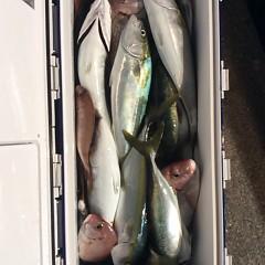 10月20日 (金)  午後便・ウタセ真鯛の写真その2