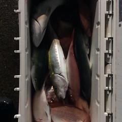 10月20日 (金)  午後便・ウタセ真鯛の写真その4