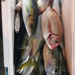 10月20日 (金)  午後便・ウタセ真鯛の写真その5