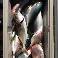 10月20日 (金)  午後便・ウタセ真鯛の写真その6