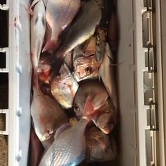 10月25日 (水)  午後便・ウタセ真鯛の写真その7