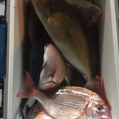 10月25日 (水)  午後便・ウタセ真鯛の写真その8