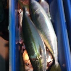 10月26日 (木)  午後便・ウタセ真鯛の写真その3