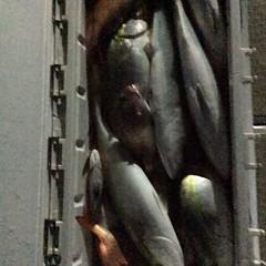 10月27日 (金)  午後便・ウタセ真鯛の写真その9