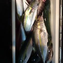 10月27日 (金)  午後便・ウタセ真鯛の写真その10