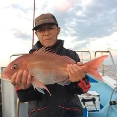 11月2日 (木)  午後便・ウタセ真鯛の写真その2