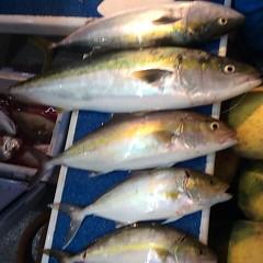 11月2日 (木)  午後便・ウタセ真鯛の写真その6