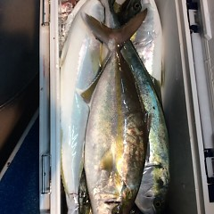 11月3日 (金)  午後便・ウタセ真鯛の写真その6