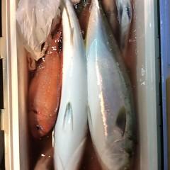11月3日 (金)  午後便・ウタセ真鯛の写真その10