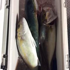 11月4日 (土)  午後便・ウタセ真鯛の写真その4