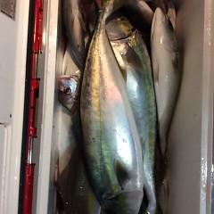 11月5日 (日)  午後便・ウタセ真鯛の写真その11