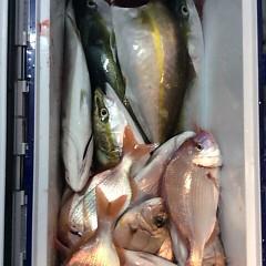 11月6日(月)  午後便・ウタセ真鯛の写真その6