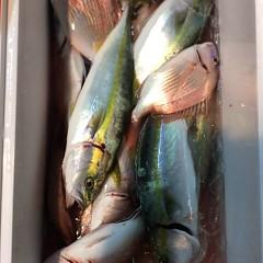11月6日(月)  午後便・ウタセ真鯛の写真その8