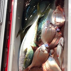 11月6日(月)  午後便・ウタセ真鯛の写真その9