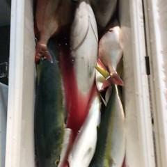 11月6日(月)  午後便・ウタセ真鯛の写真その11
