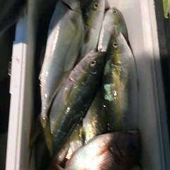 11月6日(月)  午後便・ウタセ真鯛の写真その12
