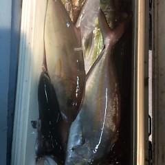 11月8日(水)午後便・ウタセマダイ釣りの写真その9