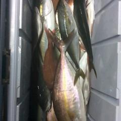 11月8日(水)午後便・ウタセマダイ釣りの写真その10