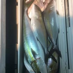 11月8日(水)午後便・ウタセマダイ釣りの写真その11
