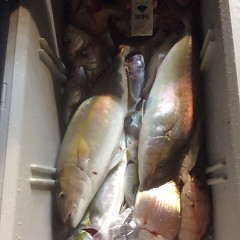 11月8日(水)午後便・ウタセマダイ釣りの写真その12