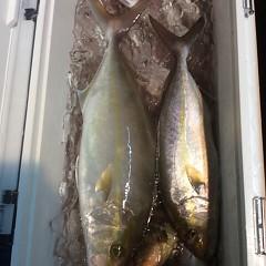 11月9日(木)  午後便・ウタセ真鯛の写真その7