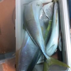 11月9日(木)  午後便・ウタセ真鯛の写真その9