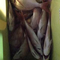 11月12日(日)  午後便・ウタセ真鯛の写真その5