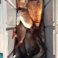 11月12日(日)  午後便・ウタセ真鯛の写真その7