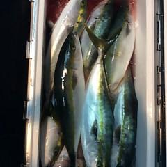 11月13日(月)  午後便・ウタセ真鯛の写真その4